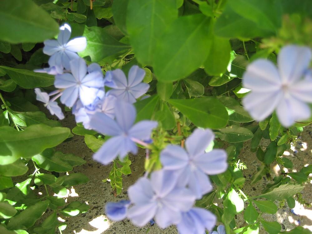 blue flowers by Elzbieta