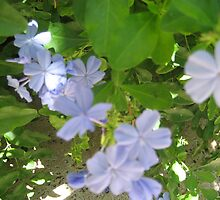 blue flowers by Elzbieta