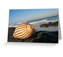 Stripped Shell Greeting Card