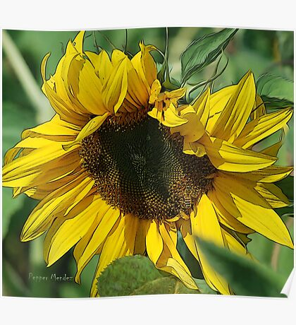 Mellow Yellow and bee  Poster