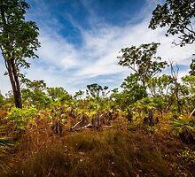 Ubirr Bush, Kakadu by Russell Charters