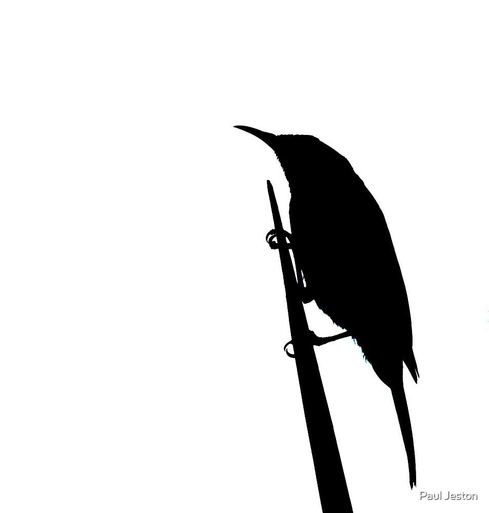 black on white by Paul Jeston
