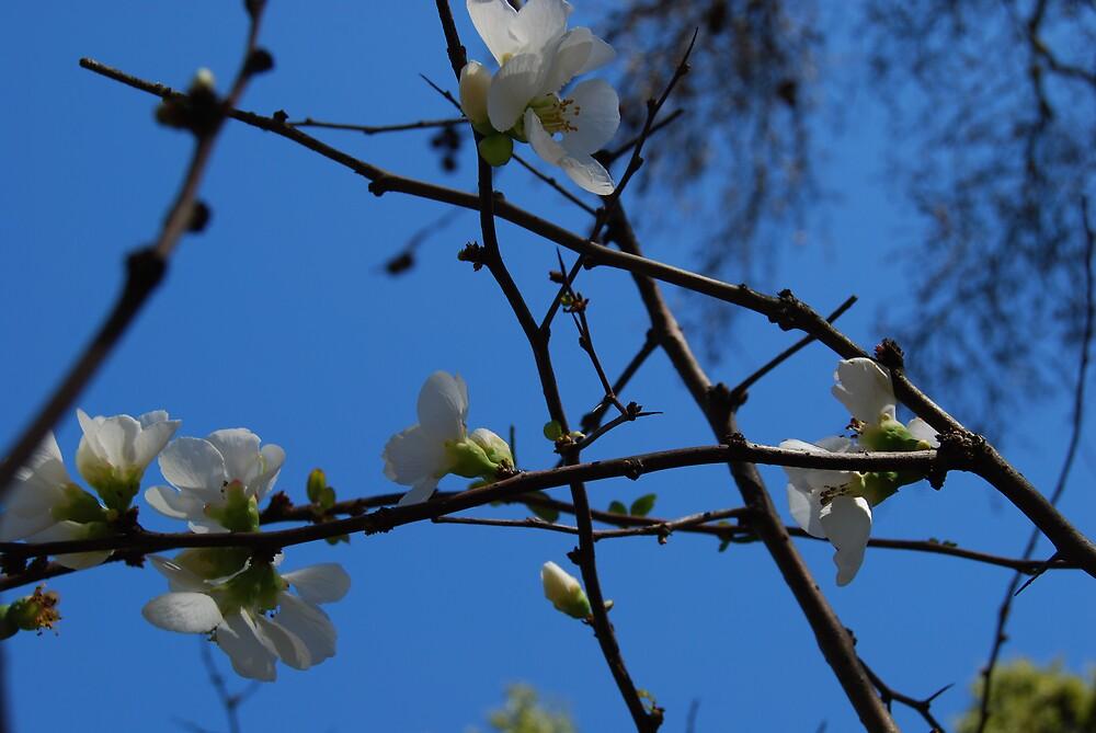 Blooms in Botanical Gardens by Princessbren2006