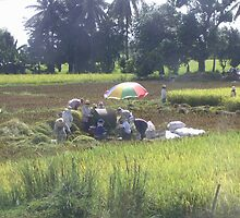 The Rice Harvest by Carlo Cesar Rodillas