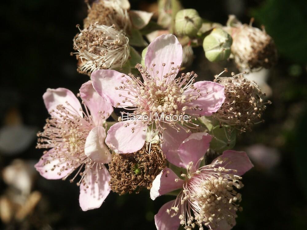 Bramble Blossom by Hazel Moore