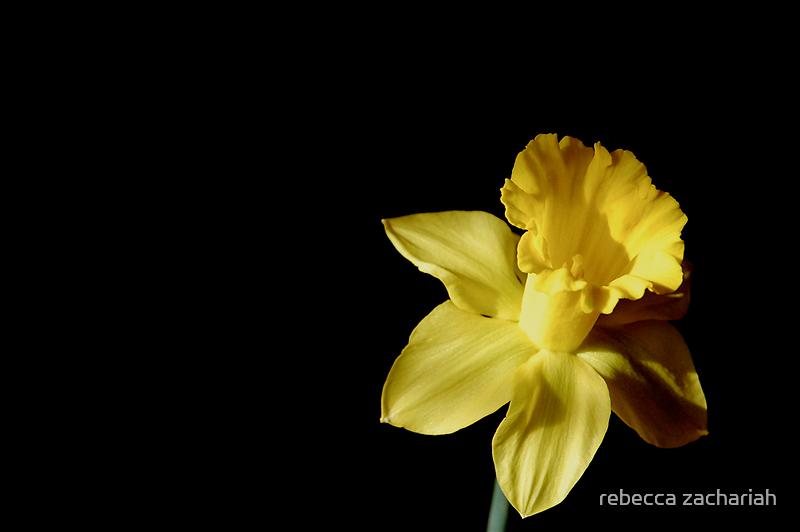 Yellow by rebecca zachariah