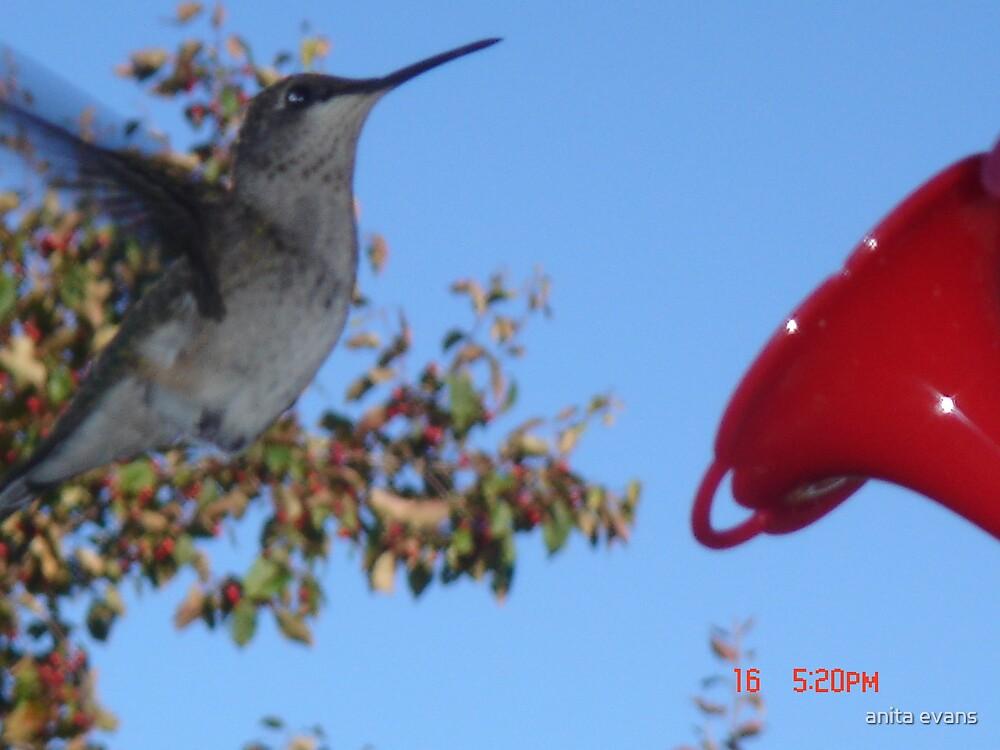 HUMMING BIRD by anita evans