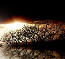 evening shadows by webgrrl