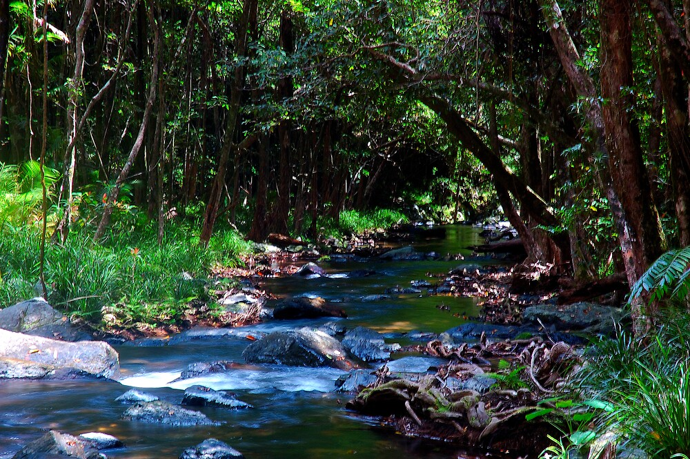 daintree stream by matthew maguire