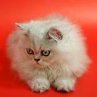 Cute cat 2 by Ravet007