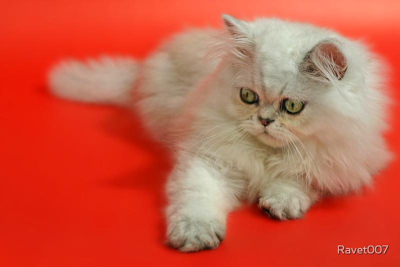 Cute cat 5 by Ravet007