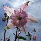 Windmill Lily by John Gilluley