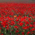 Field of Poppies by Stuart  Gennery