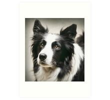 Working Border Collie Art Print