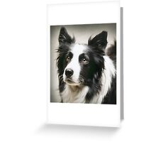 Working Border Collie Greeting Card