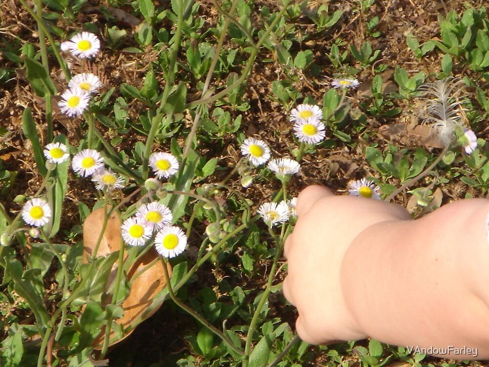 Petit Fleur by VAndowFarley
