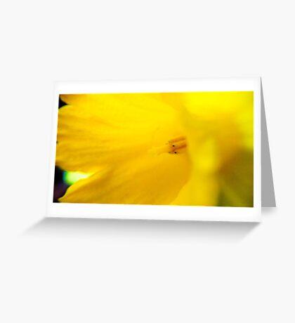 Yellow Daffodil Greeting Card