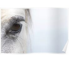 White Horse at Dawn 02 Poster