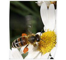 A Little Taste of Nectar! Poster