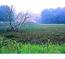#195  Field In Spring Photographic Print