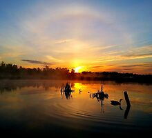 Marsh sunrise with halo and a Goose by JeffreyG