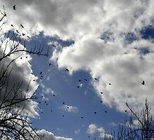 Flock Pigeons by Lachlan Kent