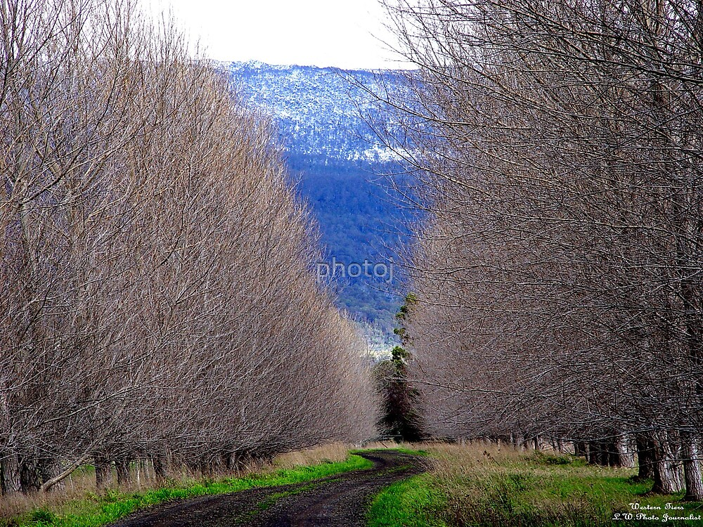 australia - tas, northern midlands by photoj