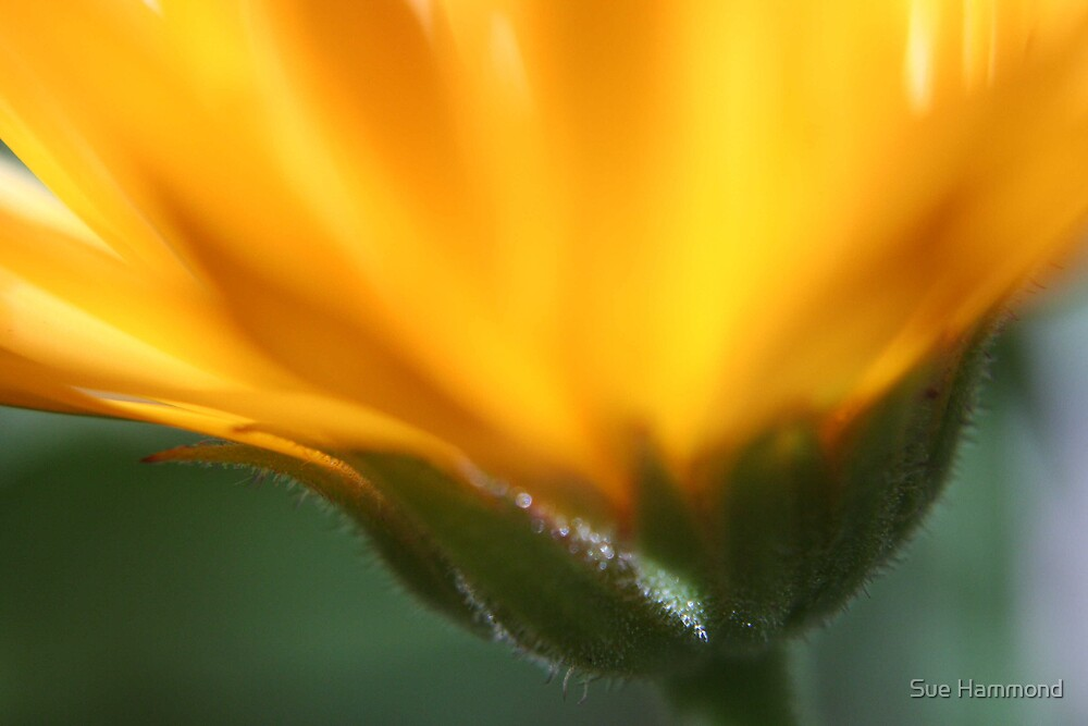 Macro flower by Sue Hammond