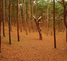 Woods by Manuel Gonçalves