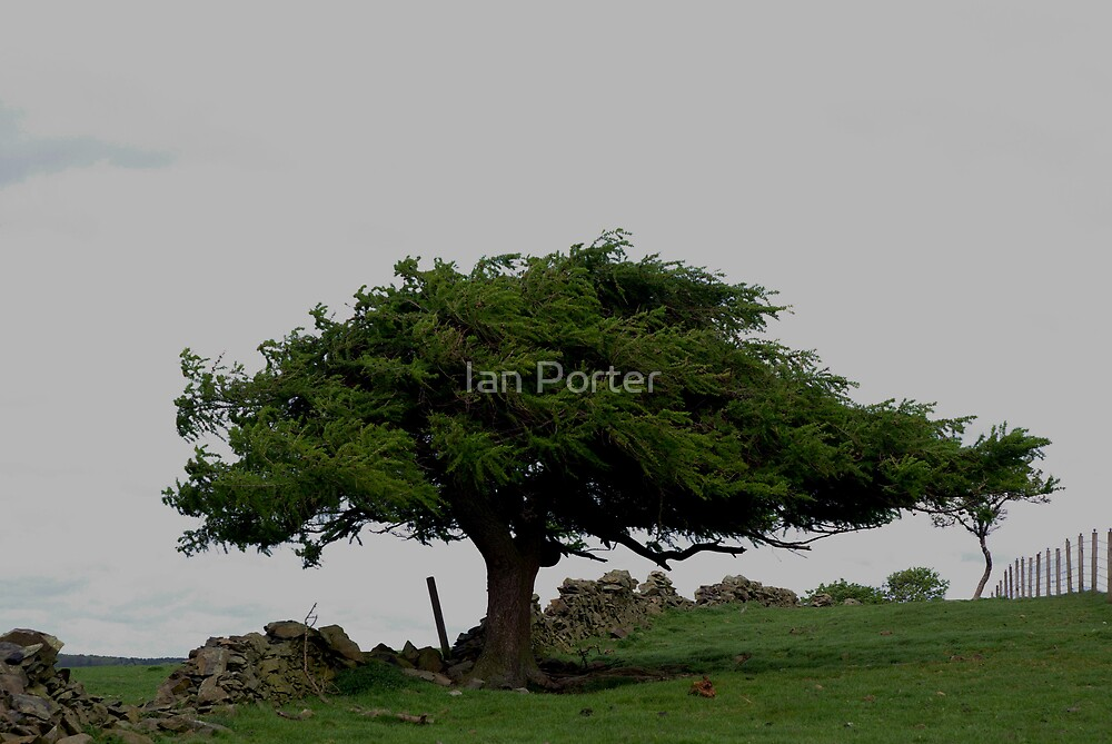 Tree by Ian Porter