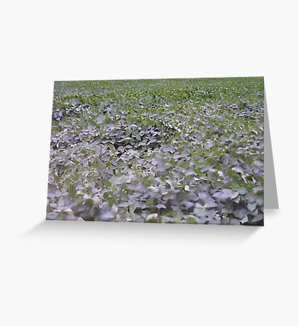 Soy in the Storm Greeting Card