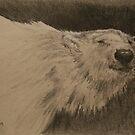 Bears are best by Pauline Winwood