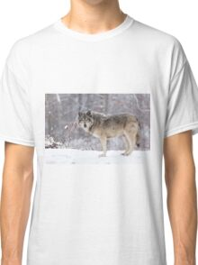 A lone Timber Wolf in the snow Classic T-Shirt