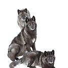 Black wolf family by Jim Cumming