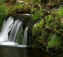 Spring Brook by Gary L   Suddath