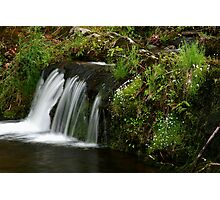 Spring Brook Photographic Print