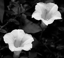 B&W white flowers by Alan Lagadu