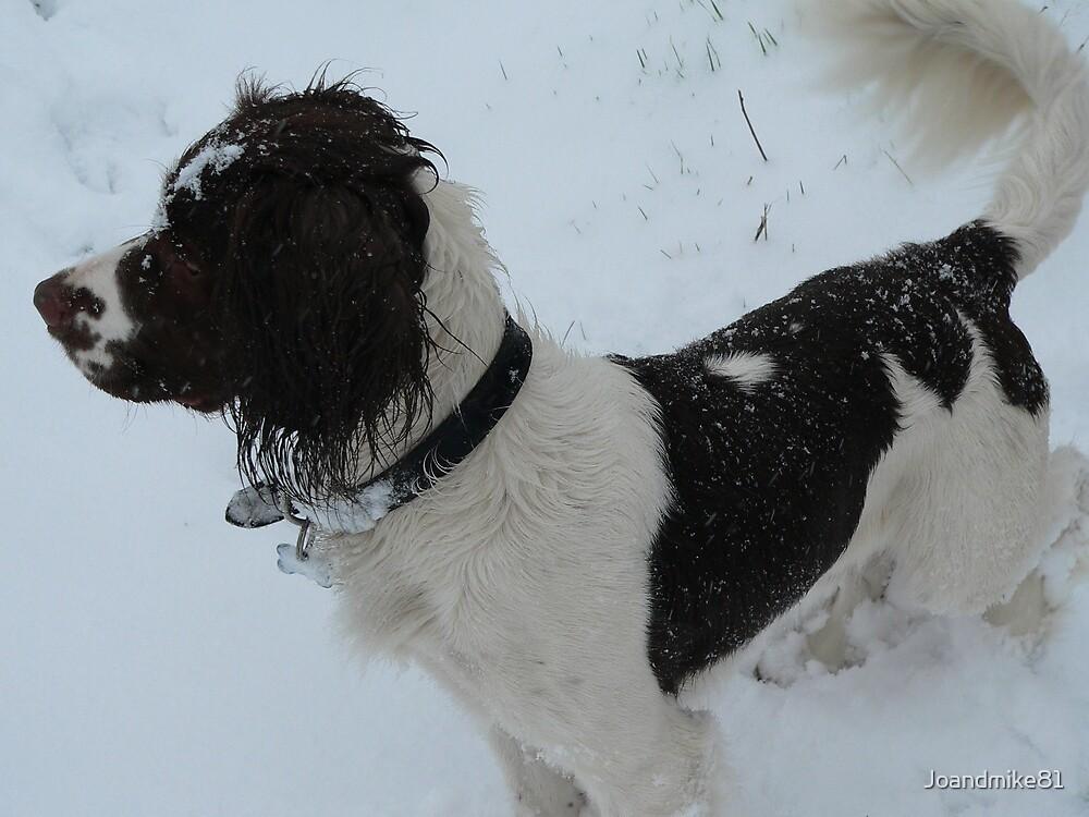 Snow Splattered Spaniel by Joandmike81
