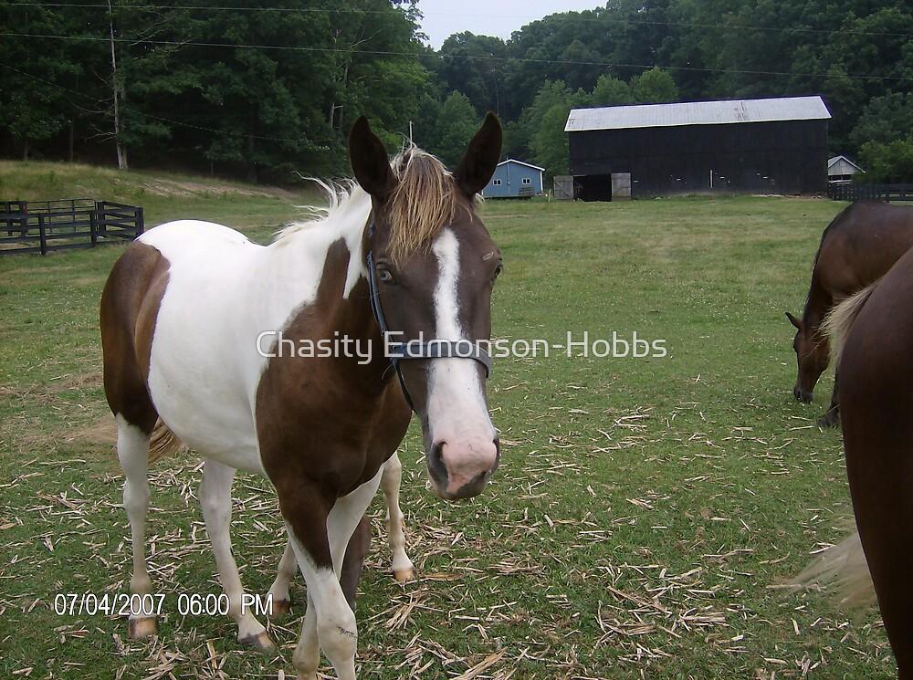 Horse by Chasity Edmonson-Hobbs