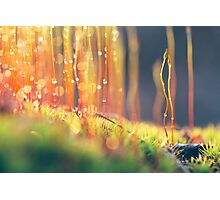 Mossy Magic Photographic Print