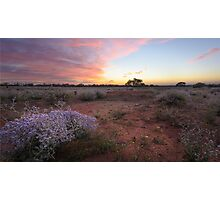 Outback spring sunrise Photographic Print