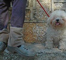 dog & shoes by Laura  Cioccia