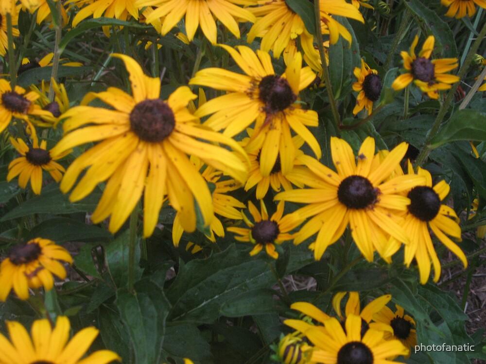 yellow petals by photofanatic