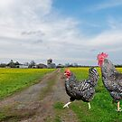 Why did the chicken cross the road? by Bonnie T.  Barry