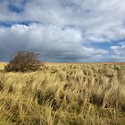 Northumberland Skies by Stephen Smith