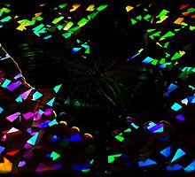 Butterfly Disco 2 by Shelly Still