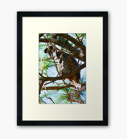 Hoot Is Down There? Framed Print