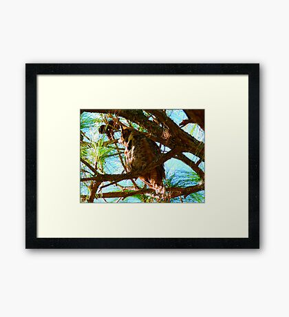 Hoot Do I See Down There Framed Print