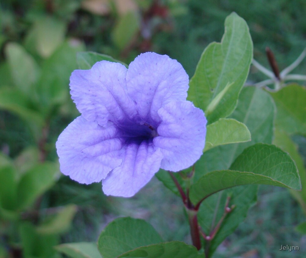 purple by Jelynn