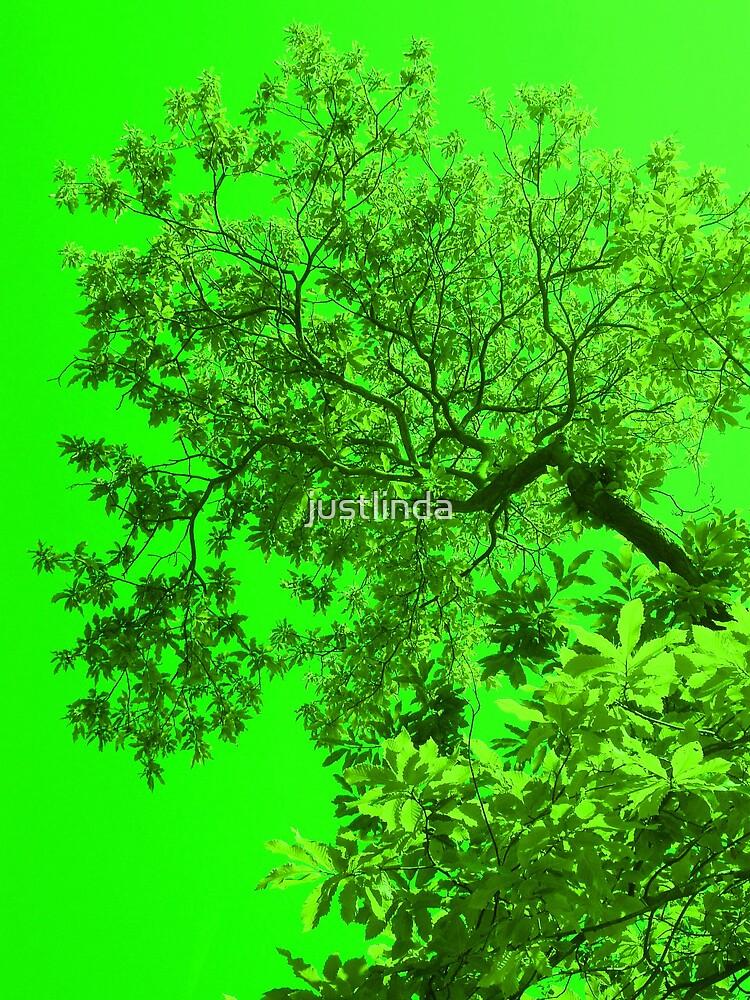 Lime Green by justlinda